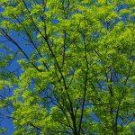 9 000 träd jobbar i det tysta för göteborgarnas luft