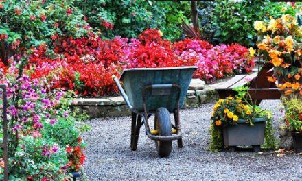 Det är nu du ser hur din trädgård ska se ut i sommar