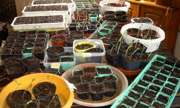 Trädgårdskalendern: Dags att sätta frö i väntan på våren