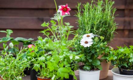 För dig med gröna fingrar: Dags att plantera kryddorna!