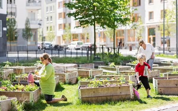 Bli stadsodlare även du – så får du gratis jord av staden