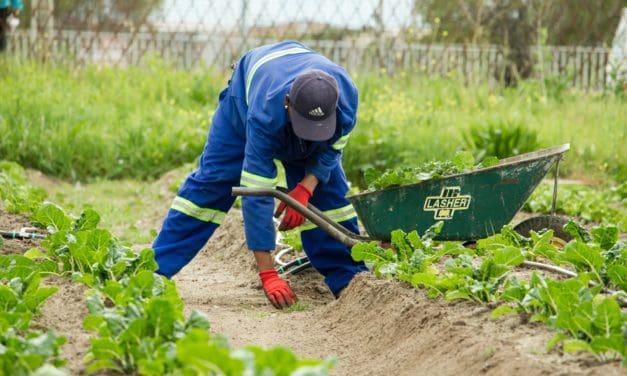 Corona eller inte – trädgårdshandeln blomstrar