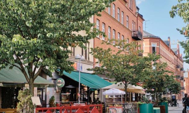 150 nya träd ska göra Möllevången grönare