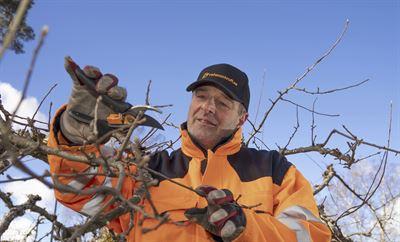 Veterankraft satsar stort på trädbeskärning